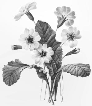 BW Vintage Floral